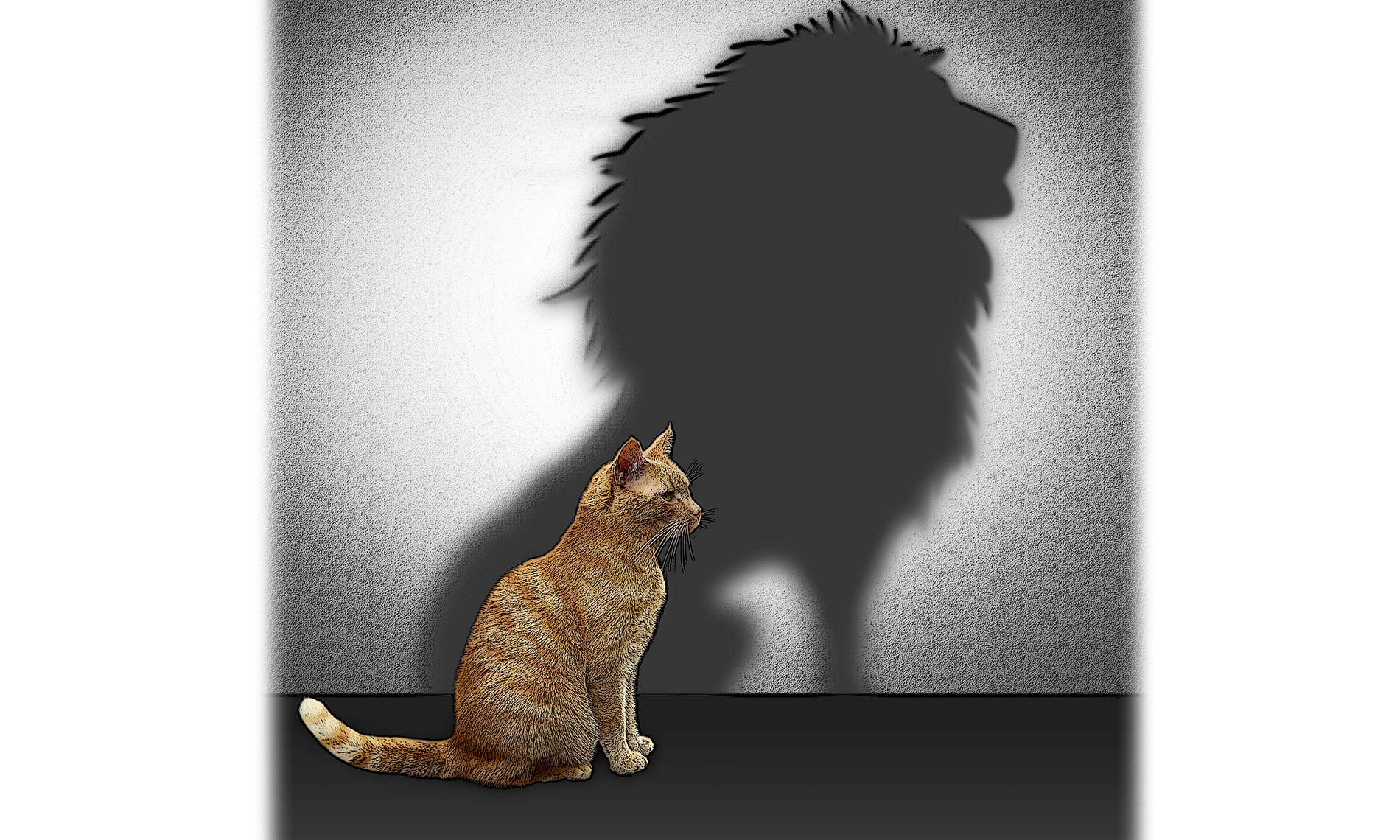 cat with lion's shadow