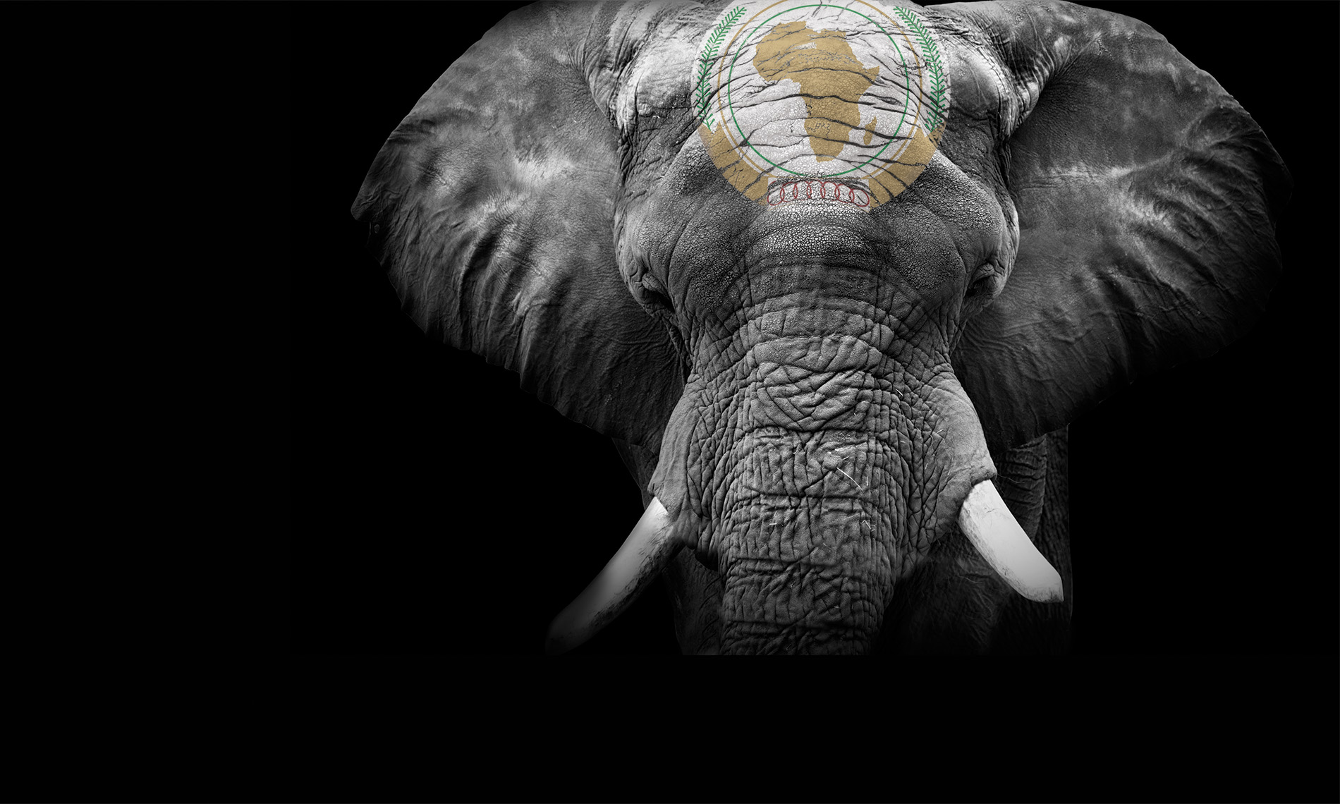 Elephant with African Union logo painted on head